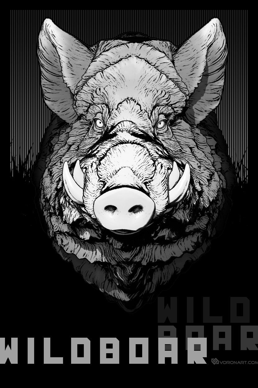 wild boar comic style illustration from digital sculpture: http ...