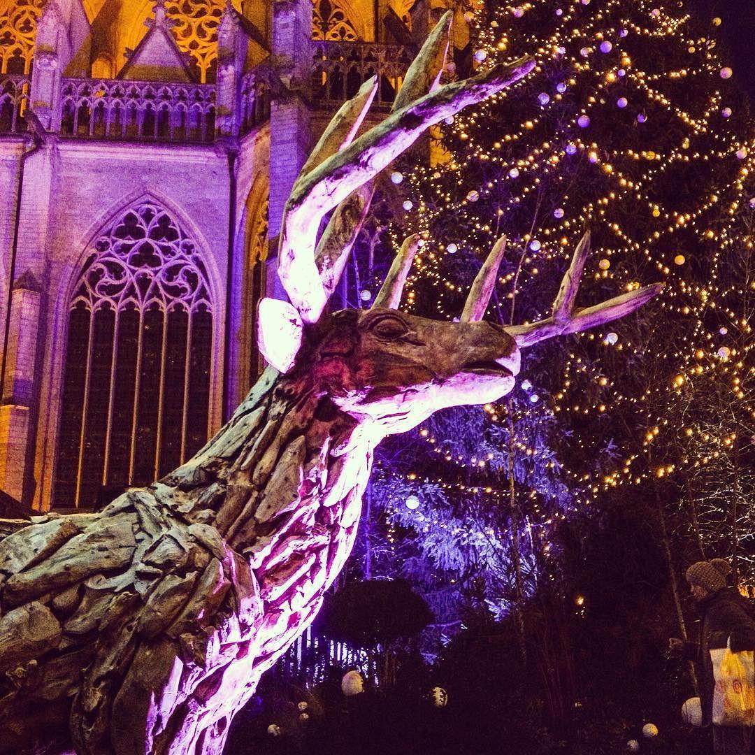 Winter garden by night // Wintertuin by night #seemyleuven #visitleuven #uitinleuven #grotemarkt #winterinleuven #wintertijd #winterseason by leuven