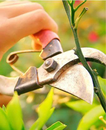 Advice On Cutting Roses For The Vase Garden Roses Pinterest