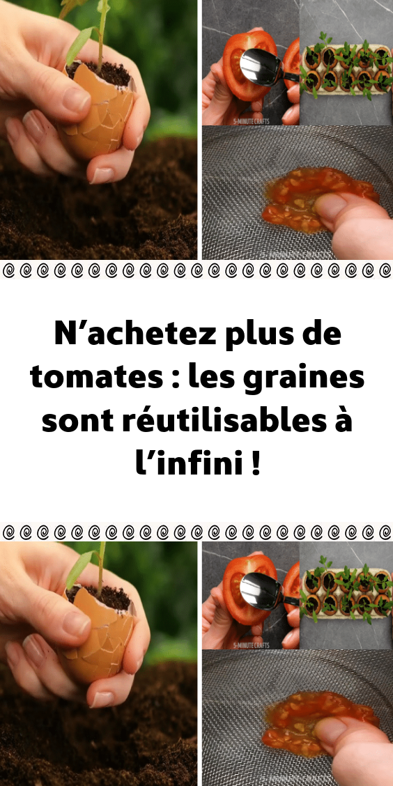 Photo of N'achetez plus de tomates : les graines sont réutilisables à l'infini !