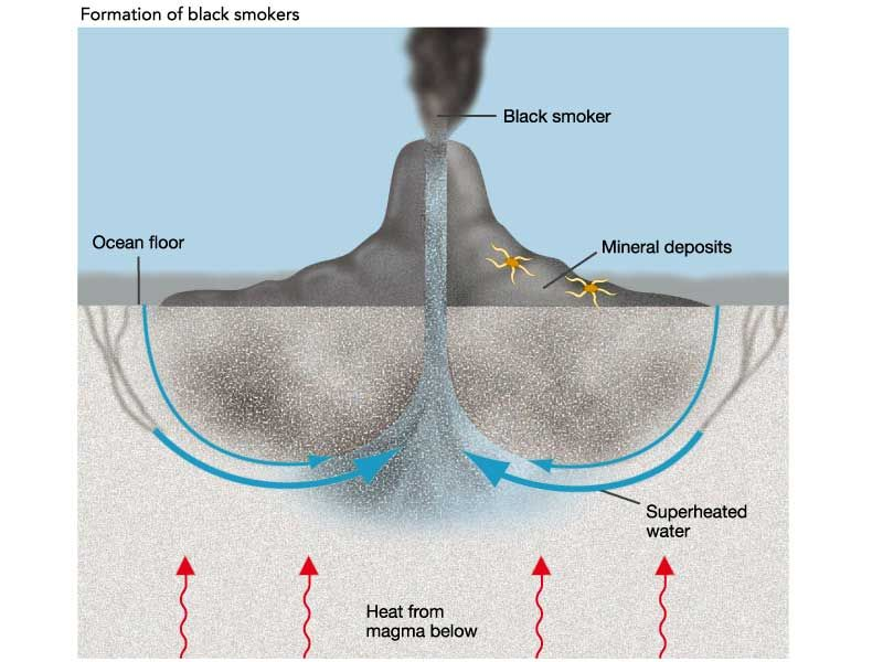 Image Result For Hydrothermal Vents Food Web Hydrothermal Vents