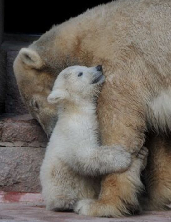 """""""I do not give you any more, my DARLING-MOM!"""""""