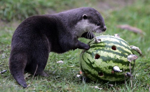 It S Friday So Here S A Slideshow Of Otters From Around The World