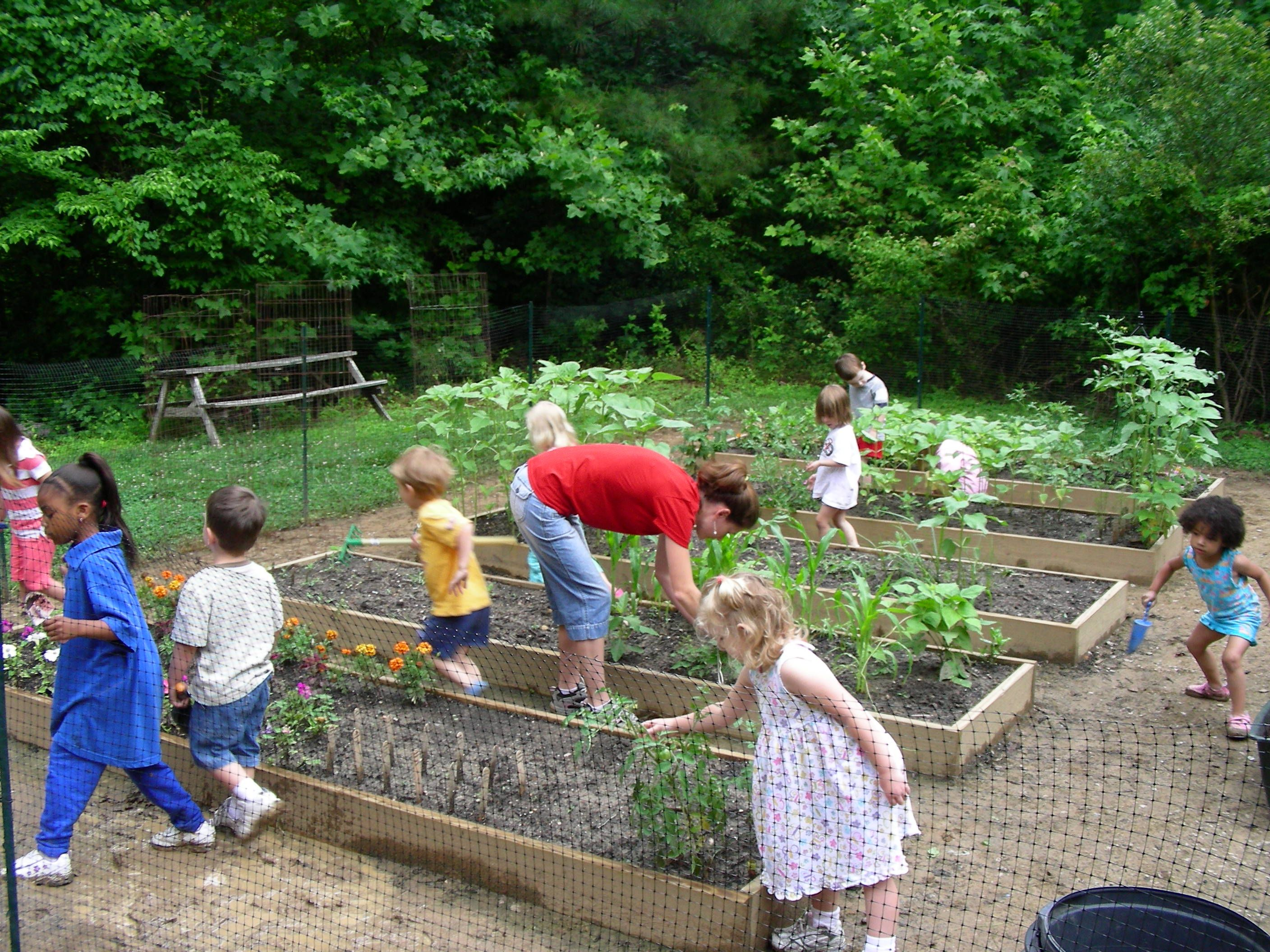 childrens vegetable gardens introduction natural learning initiative - Vegetable Garden Ideas For Kids