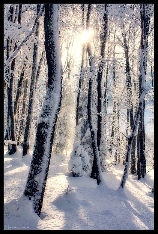 Tales of Winter by FlorentCourty.deviantart.com on @deviantART