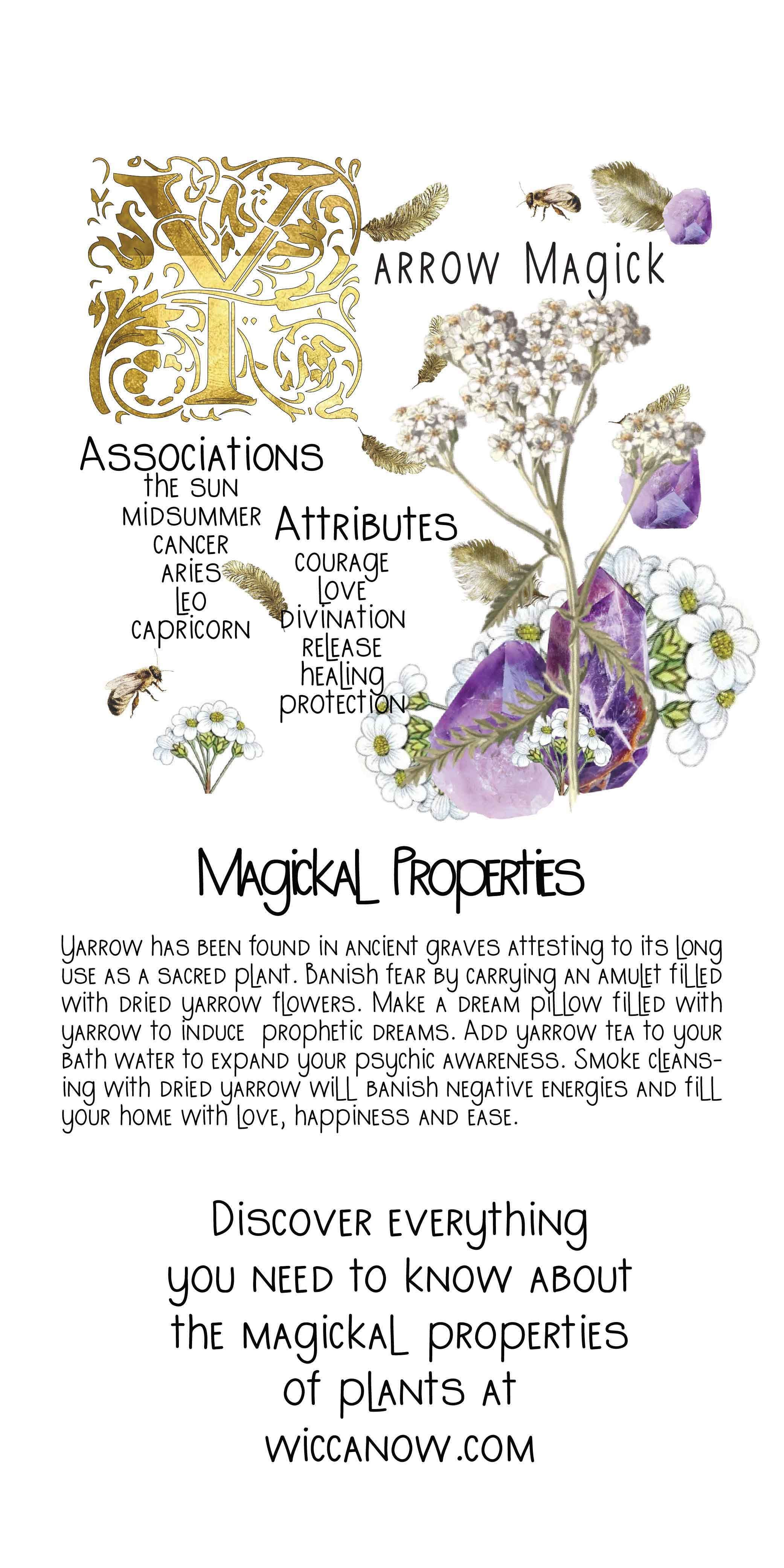Yarrow Magical Properties And Benefits In 2020 Magic Herbs Magick Green Witchcraft
