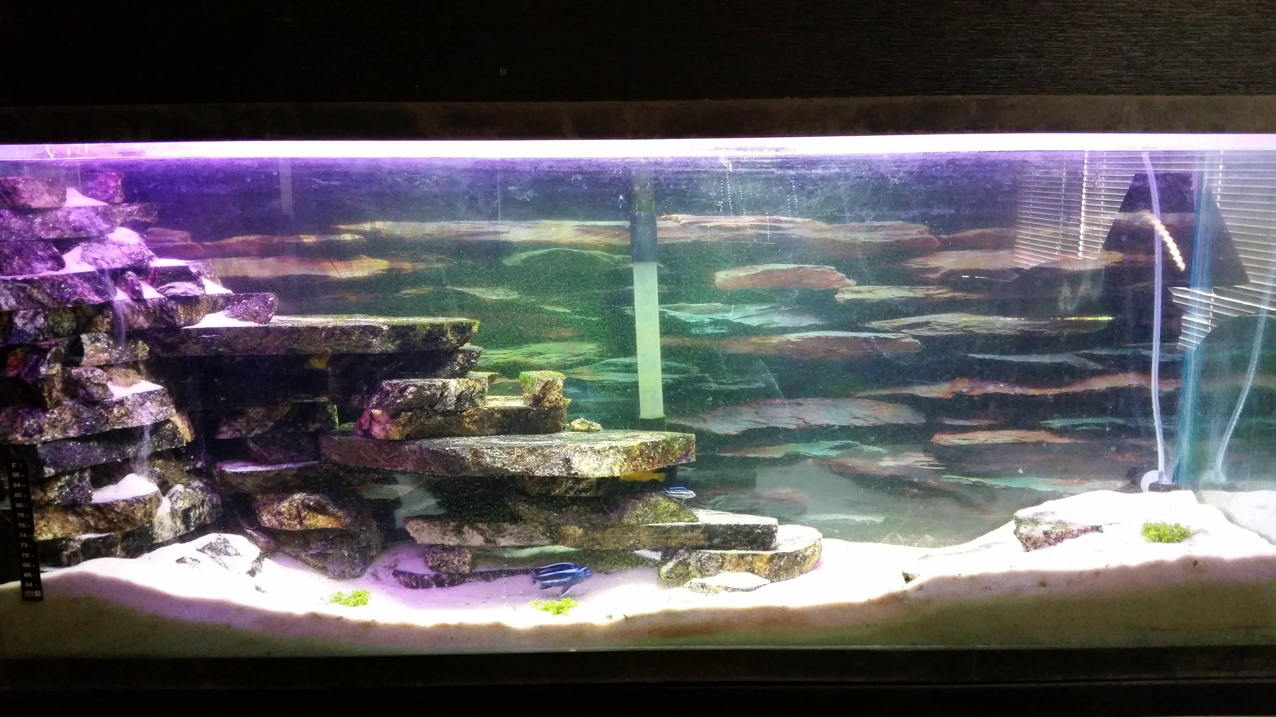 Fish Tank Sand Waterfall  Google Search