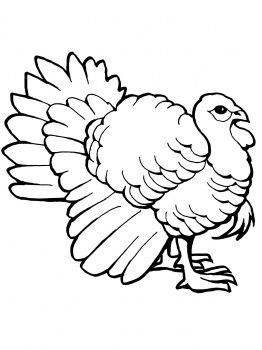Turkey Tom Turkey Coloring Pages Farm Animal Coloring Pages