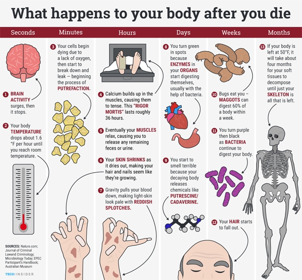 The two certainties of life: taxes, and death. Some day, our time on Earth will inevitably come to an end and, well, being dead, you won't be able to see what goes on to happen to your body afterward. So for the curious among you, Tech Insider hascreated a go-to guide for the grueling biology of dying and decomposition.