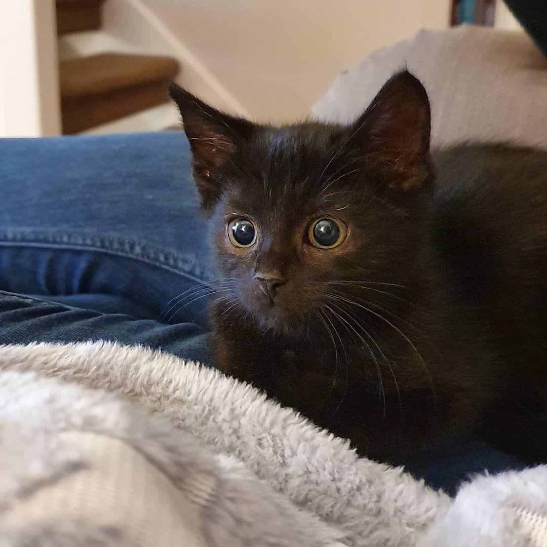 Hello Lil Morts Kitty Cats Animals