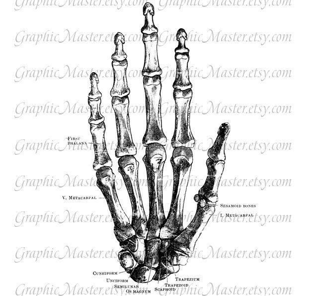 Skeleton Hand Anatomy Fist Digital Collage Sheet By Graphicmaster