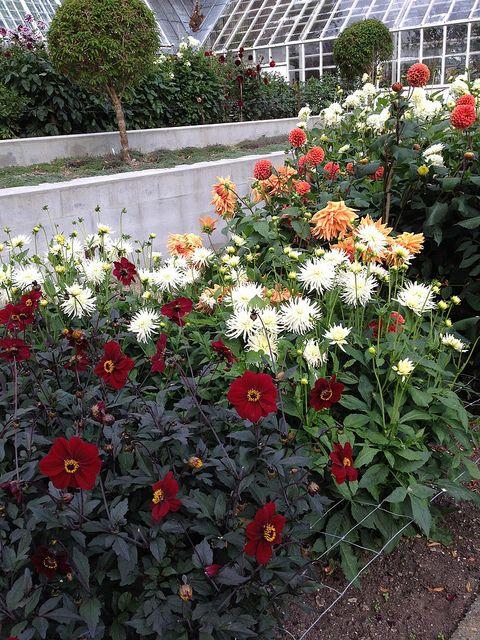 Dahlia Garden At Sophienholm