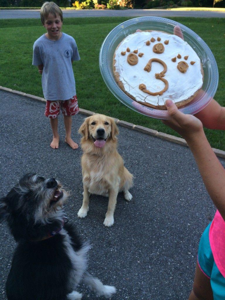 Apple Stuffed Acorn Squash Recipe Dog Birthday Homemade Dog And Dog