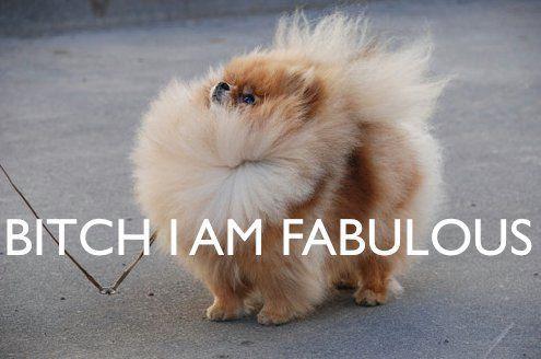 Haha! I want this fluffy Pomeranian.