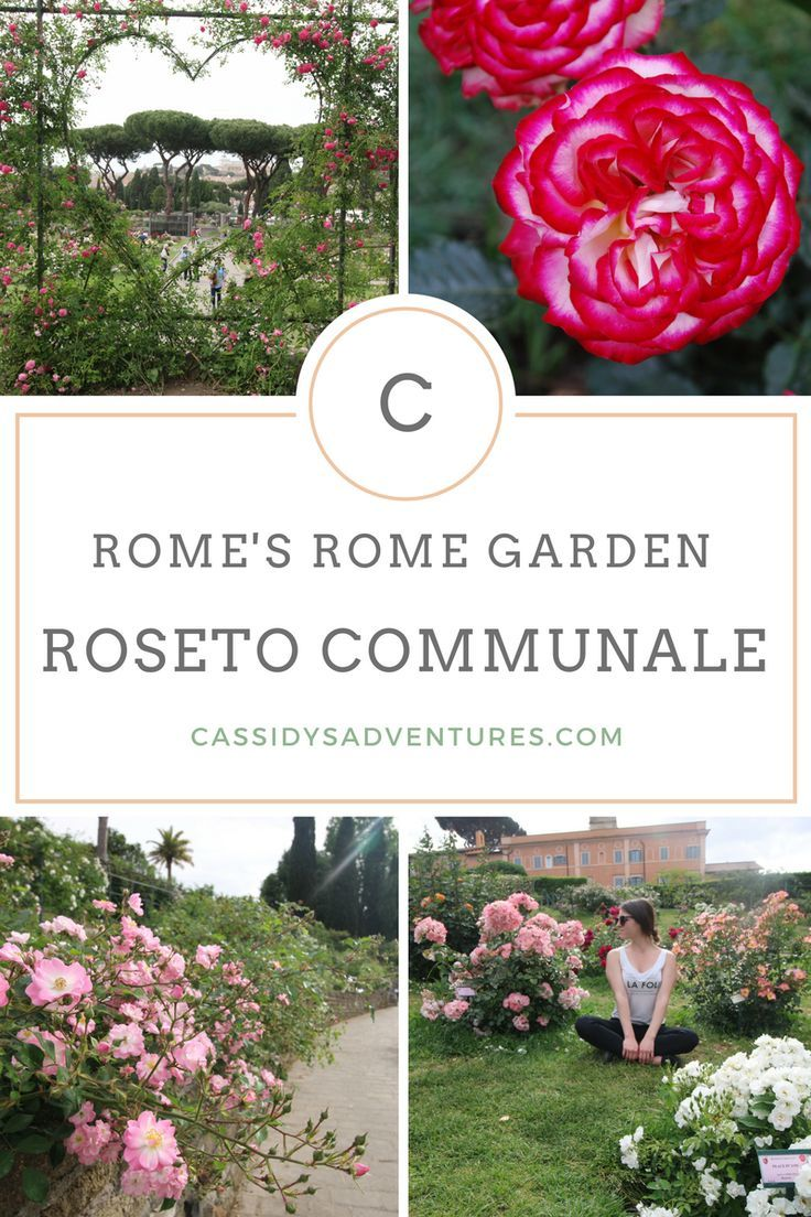 Rome S Rose Garden The Roseto Comunale Opens On The 21st Of April And Stays Open Only Until June 15th The Europe Travel Tips Europe Travel Italy Travel Tips