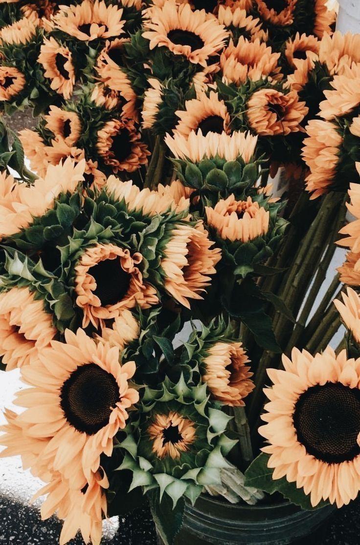 Sunflowers Fall Sunflower Wallpaper Flower Aesthetic Flower