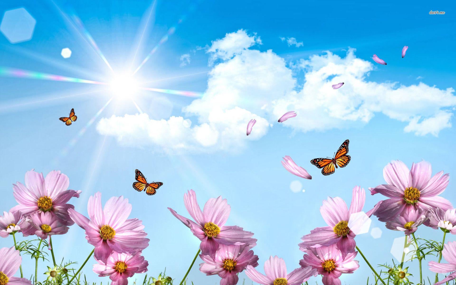 Spring Butterfly Wallpaper Desktop Outdoors Wallpaper 1080p Summer Wallpaper Spring Wallpaper Butterfly Wallpaper