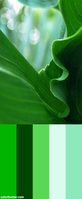 Leaf+Whorls+Color+Scheme
