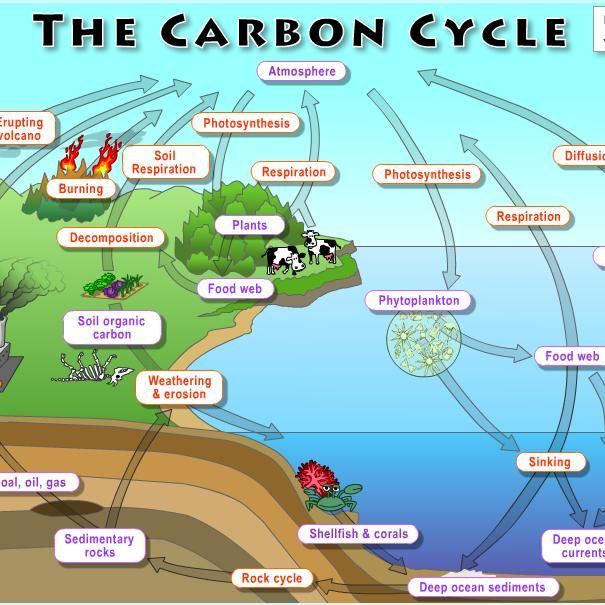 Why Study The Carbon Cycle Carbon Is Everywhere In The Oceans