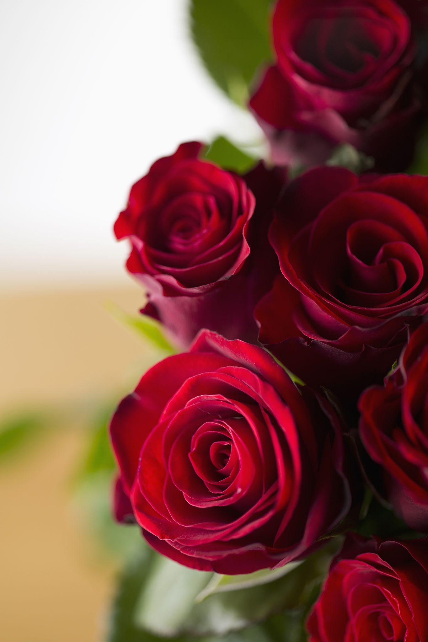 The Meaning Behind Popular Valentine's Day Flowers (With