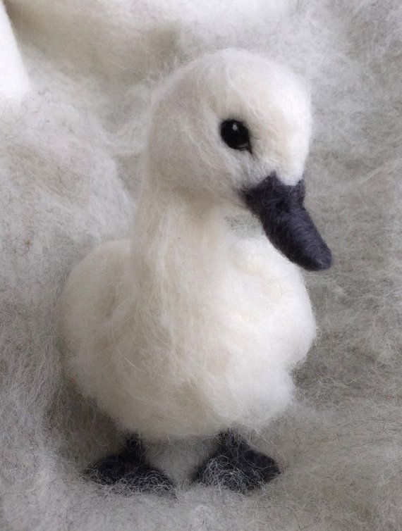 Dieses baby schwan ist kein hässliches entlein weich und