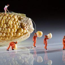 Una mirada al fascinante mundo en miniatura creado por el fotógrafo inglés David Gilliver