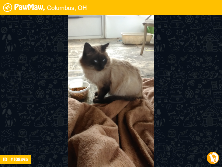 Hurray Unknown Is Reunited Pets Pet Owners Ragdoll