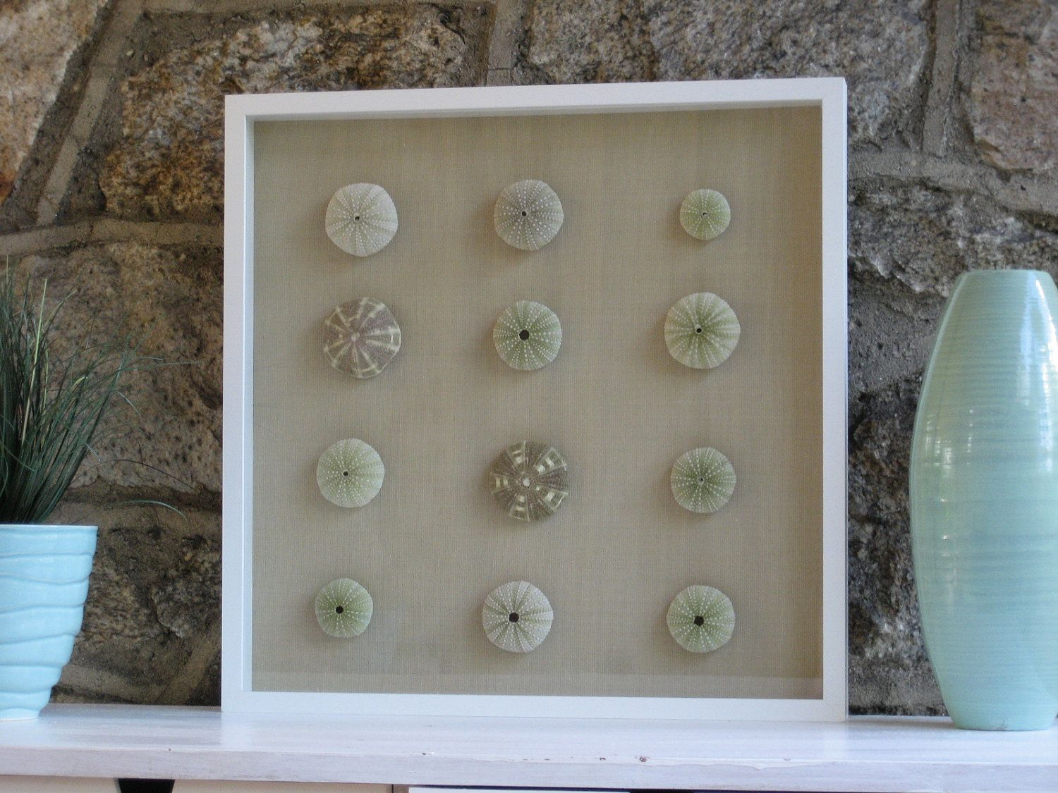 Sea Urchins - Natural Sea Urchins Framed in Large Shadow Box ...