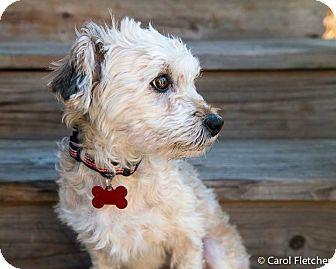 Pin by Susan Pelletier on Awwwwwwhhhhhh!!!!!! | Pet Adoption