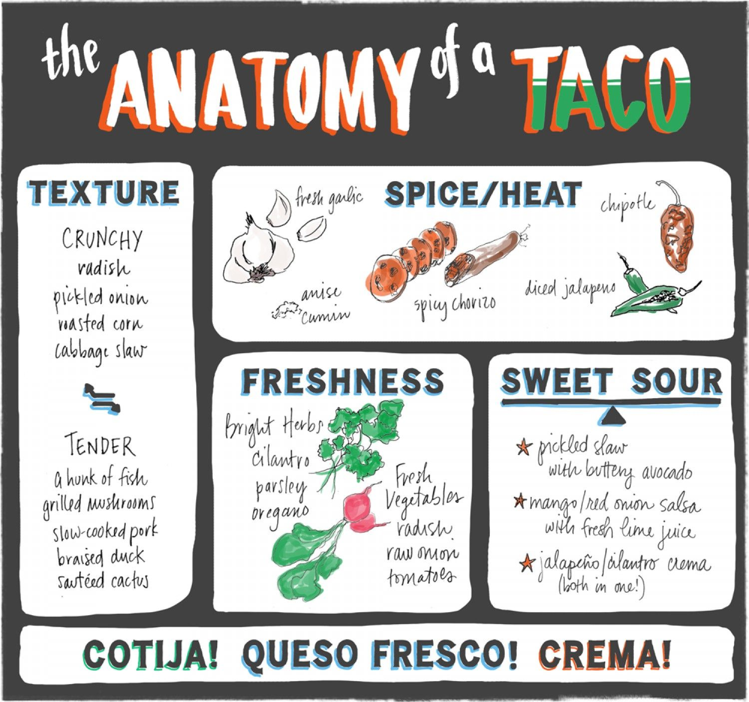 The Anatomy Of A Taco Infographic Tacos Crunchy Radish Anatomy