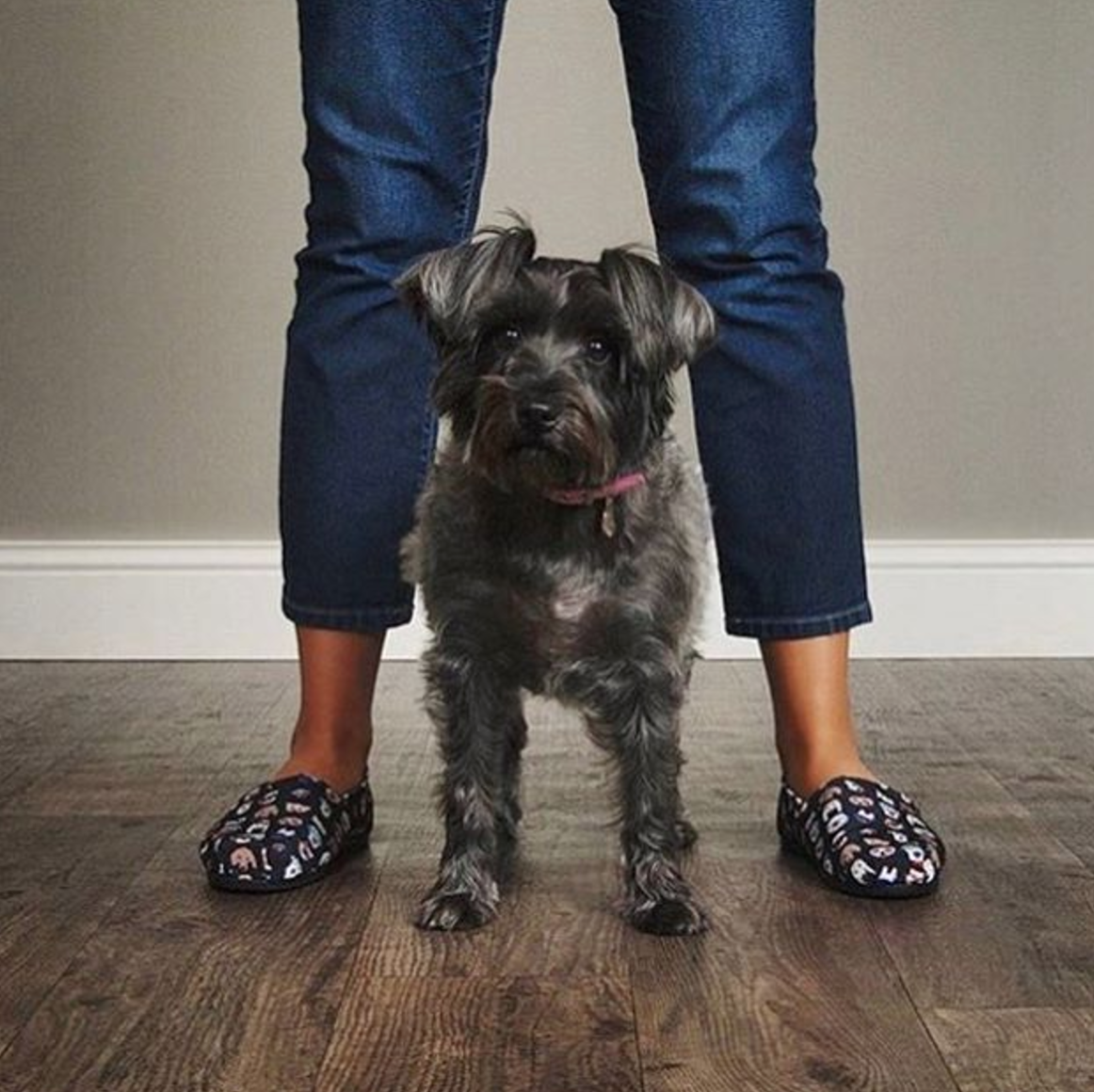 This Is What We Call A Pup Power Stance Shop The Pup Smarts Shoes