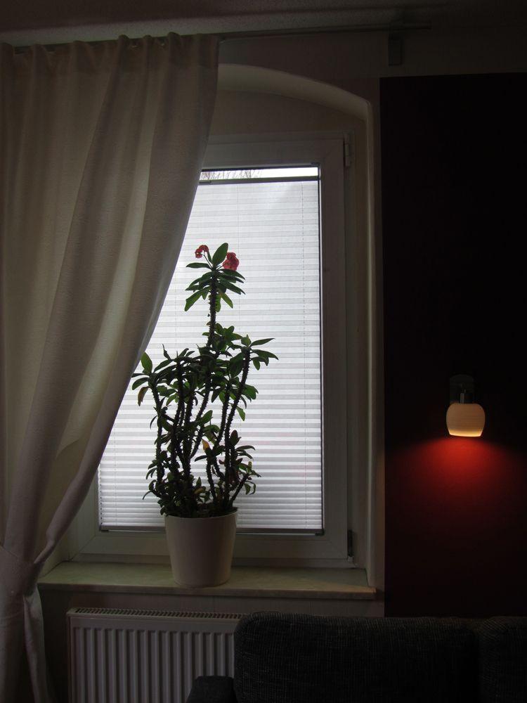 Sichtschutz Plissee nach Maß nicht nur fürs Wohnzimmer