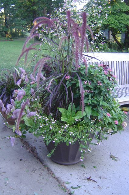 Hot Containers For Southern Summers And Other Lessons From My Sister S Garden Cool Plants Container Plants Plants