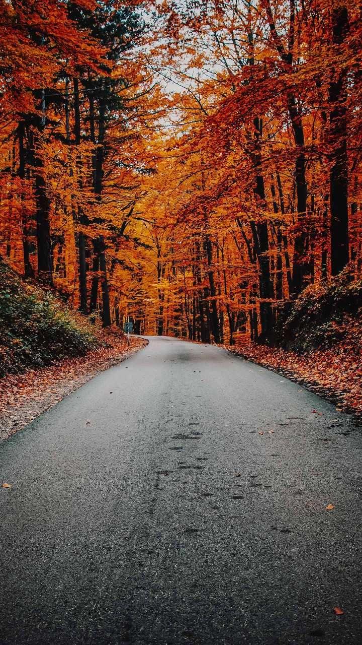 Beautiful Image By Benjamin Voros Landscape Pictures Lightroom Presets Portrait Autumn Wallpaper Hd