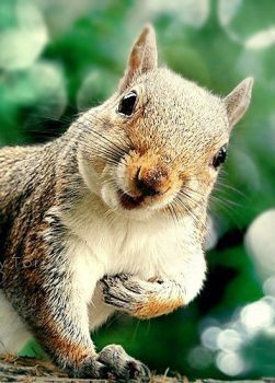 Me? Why no, I would never drop acorns on you head. (48 pieces)