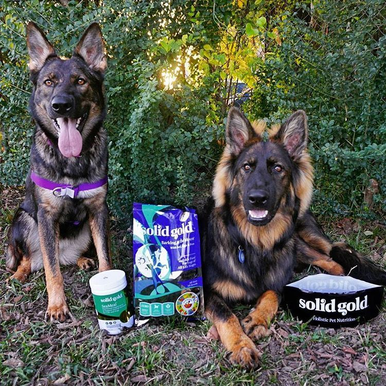 Holistic pet nutrition more than 40 people years in the making. Healthy Makes Happy™ 🐶🐱
