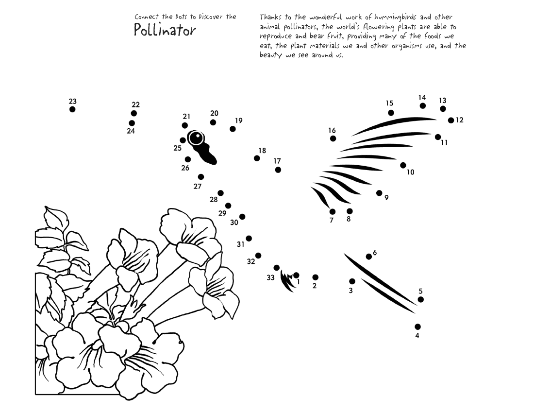 connect dots hummingbird page coloring dot to dot pinterest