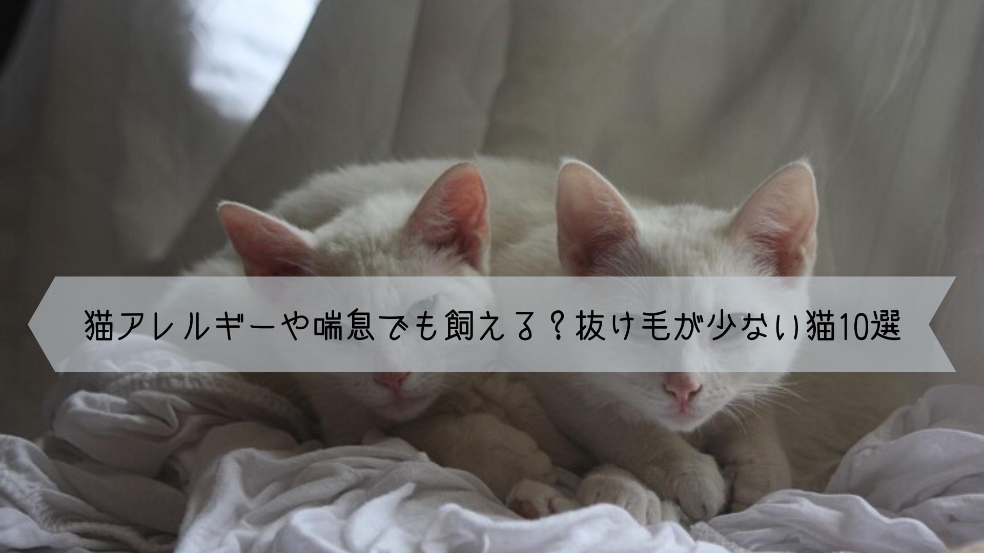猫アレルギーや喘息でも飼えるかも 飼いやすい抜け毛が少ない猫の種類10選 猫 種類 猫 アレルギー 猫
