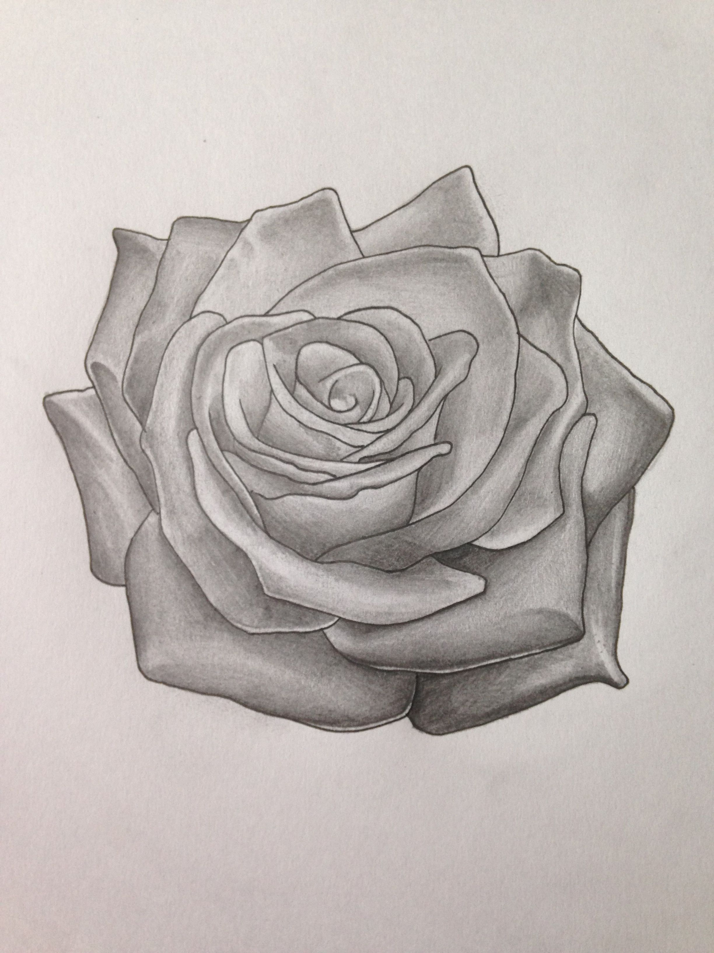 Hand Drawn Rose Tattoo Design using Pencil Rose tattoo