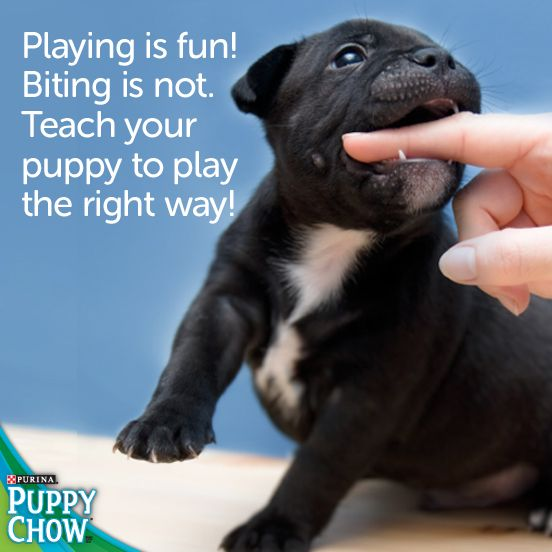 Purina Puppy Chow Training Tips Playing Is Fun Biting Is Not