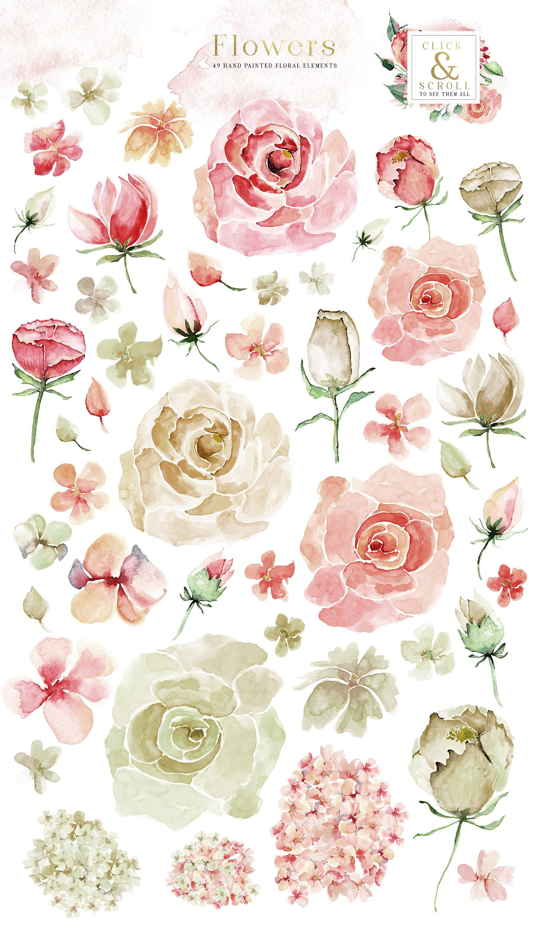 Creme Rose Watercolor Set Watercolor Rose Watercolor Clipart