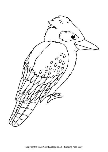 Kookaburra Colouring Page Animal Coloring Pages Australian