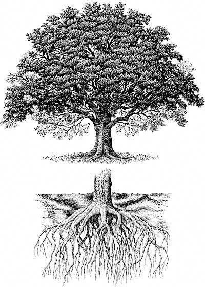 Oak Tree With Roots Tattoo: Roots Tattoo, Tree Roots Tattoo, Oak Tree