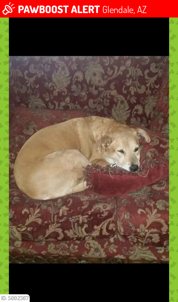 Lost Shyanne Last Seen May 7 2018 Glendale Az 85308 Near N 55th Ave W Michelle Dr 602 319 5243 Losing A Pet Save Animals Find Pets