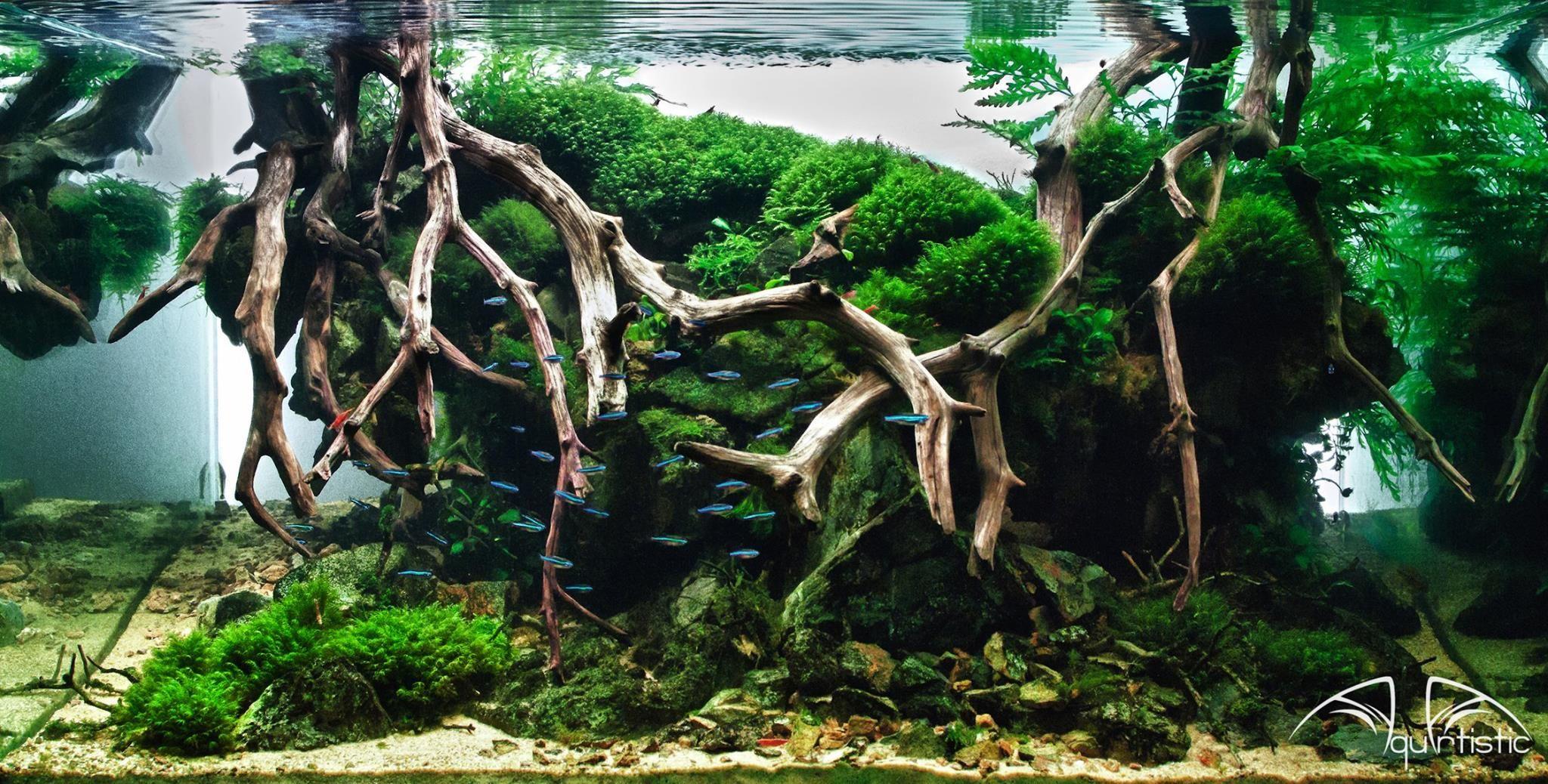 Super dat de vissen er rond kunnen zwemmen. Heeft zoiets zeeaquarium achtig.