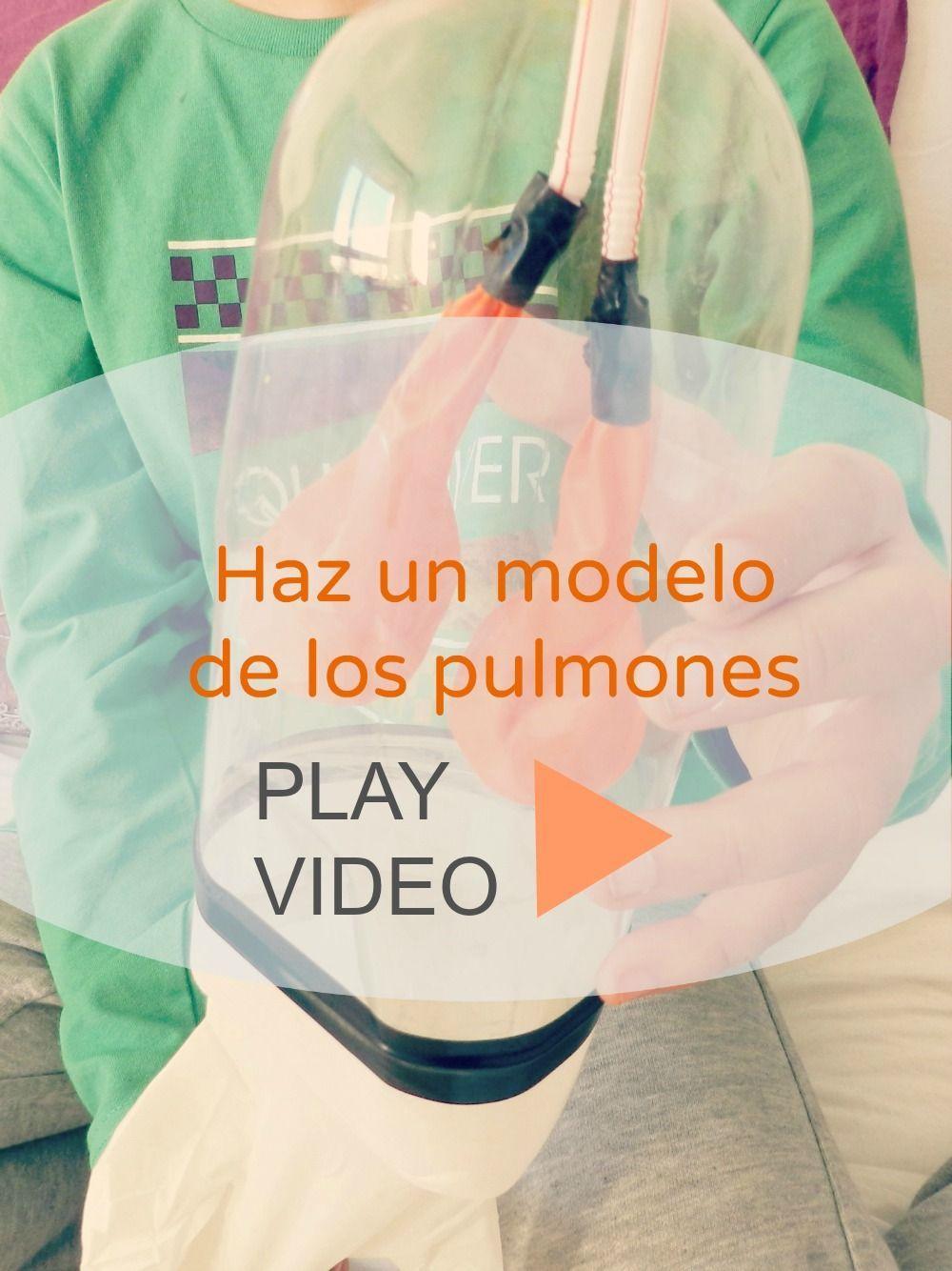 video modelo de pulmones | giraffes | Pinterest | Modelado, El ...