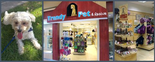 Trendy Pet Inside Of Fashion Square Mall Has Adoptable Animals As Well As Tons Of Pet Merchandise With Images Puppy Store Dog Sounds Puppies For Sale
