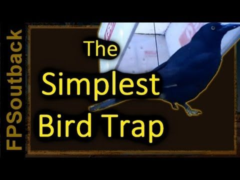 how to make a bird snare trap