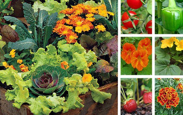 Jardin Potager Le Mariage Fleurs Et Legumes Jardin Potager