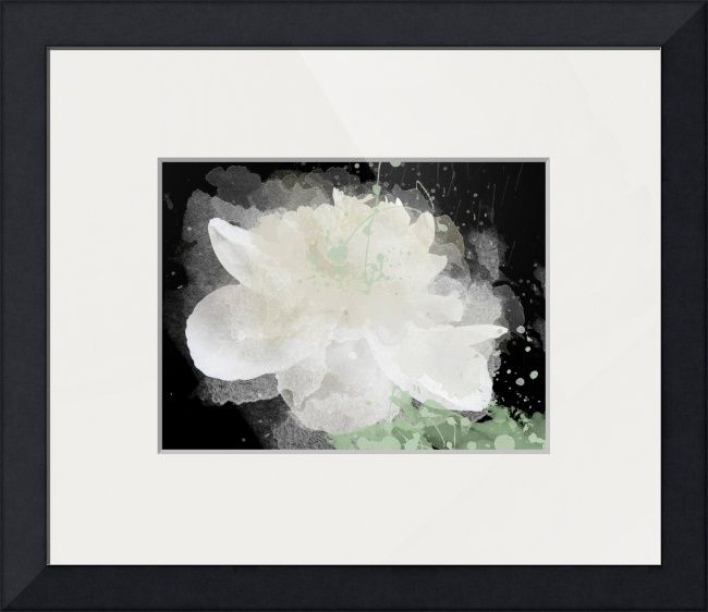 White Peony FloweR\